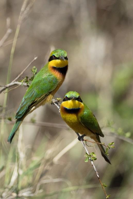 Birdwatching, pentru pacea minții